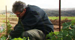 Terroir Kalecik 'Priceless Heritage'